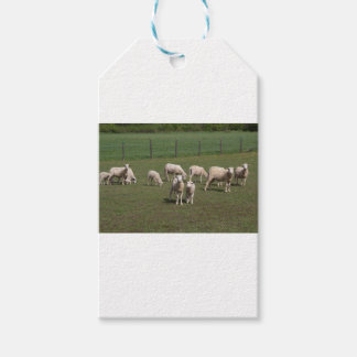 Herd of sheep gift tags