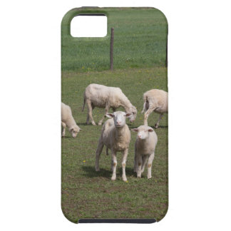 Herd of sheep iPhone 5 cases