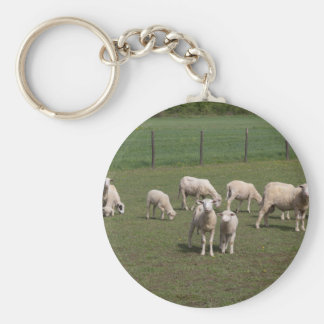 Herd of sheep key ring
