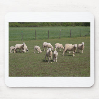 Herd of sheep mouse pad