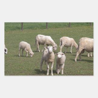 Herd of sheep rectangular sticker