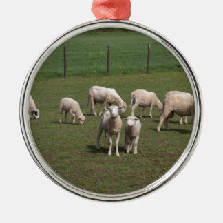 Herd of sheep Silver-Colored round decoration