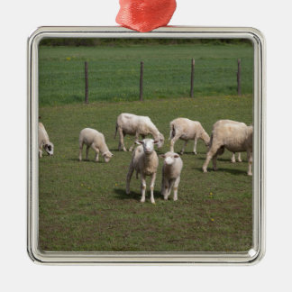 Herd of sheep Silver-Colored square decoration