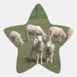 Herd of sheep star sticker