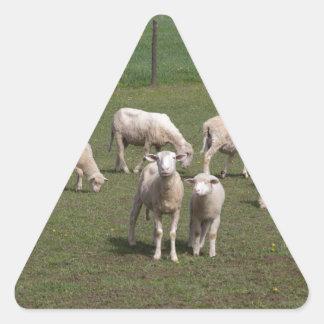 Herd of sheep triangle sticker