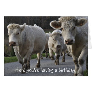 Herd you re having a birthday greeting cards