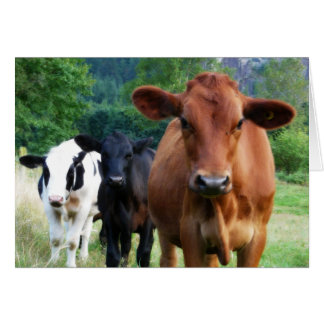 Herd You Weren't Feeling Well Card