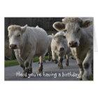 Herd you're having a birthday! card