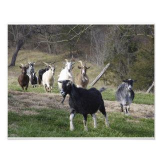 Herding Home Photo Print