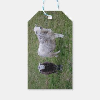 Herdwick Ewe and Lamb Gift Tag