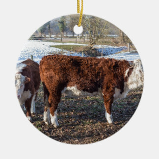 Hereford calves in winter meadow with snow ceramic ornament
