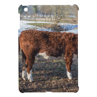 Hereford calves in winter meadow with snow iPad mini covers