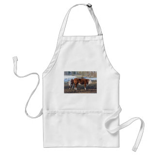 Hereford calves in winter meadow with snow standard apron
