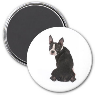 Here's Looking at You Boston Terrier Magnet