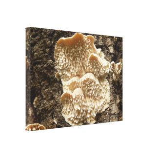 Hericium cirrhatum Mushroom Canvas Print