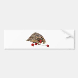 Hermann Tortoise and Strawberries Bumper Sticker