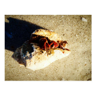 Hermit Crab Clearwater Beach Florida Postcard
