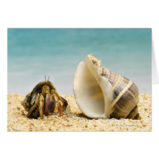 Hermit crab looking at larger shell card