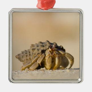Hermit Crab on white sand beach of Isla Carmen, Metal Ornament