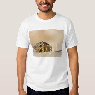 Hermit Crab on white sand beach of Isla Carmen, Shirt
