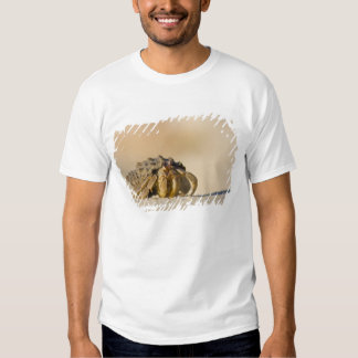Hermit Crab on white sand beach of Isla Carmen, T Shirts