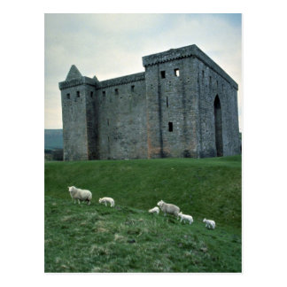 Hermitage Castle with sheep, Scotland Post Cards