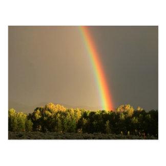 Hermitage Rainbow Postcard