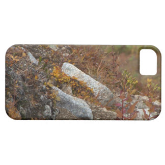 Hermosa Hillside iPhone 5 Cover