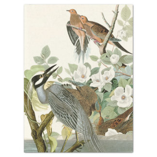 Heron & Dove Birds Audubon Flowers Tissue Paper
