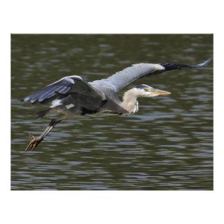 Heron Fly Past 21.5 Cm X 28 Cm Flyer