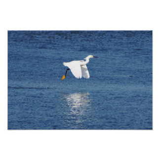 Heron Flying over Water Poster