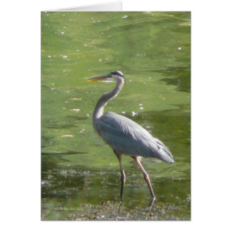 Heron Green Card
