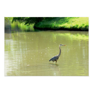 HERON IN POND/SHADES OF GREEN/YELLOW/PHOTOG. POSTER
