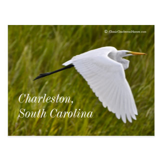 Heron of Charleston Postcard