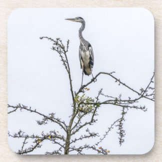 Heron on a tree coasters