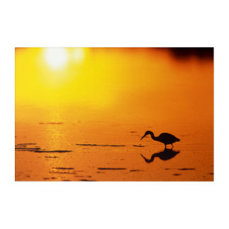 Heron silhouette at sunset, Florida Acrylic Wall Art