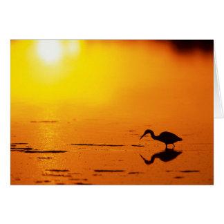 Heron silhouette at sunset, Florida Card