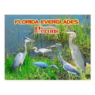 Herons of Everglades National Park, Florida Postcard