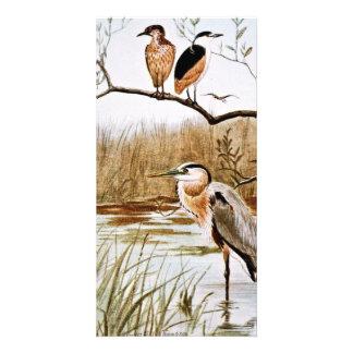 Herons Vintage Art Photo Card Template