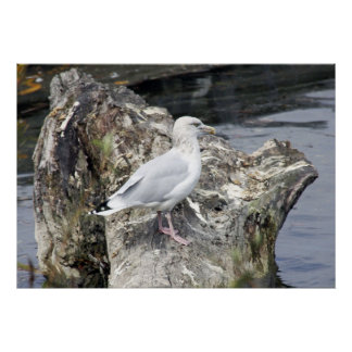HERRING GULL A TOP WOODEN STUMP POSTER