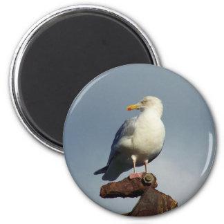 Herring Gull Charlestown Harbour Cornwall England 6 Cm Round Magnet