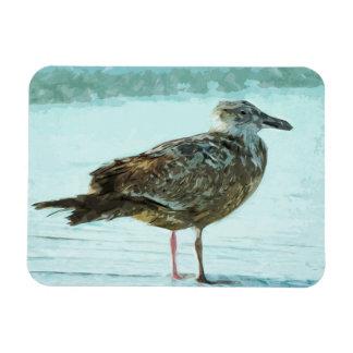 Herring Gull on the Beach Abstract Rectangular Photo Magnet