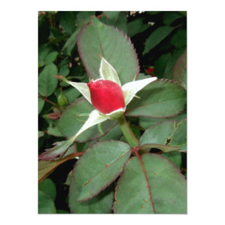 HEY! I;M BUDDING HERE! (rose design) ~ 14 Cm X 19 Cm Invitation Card