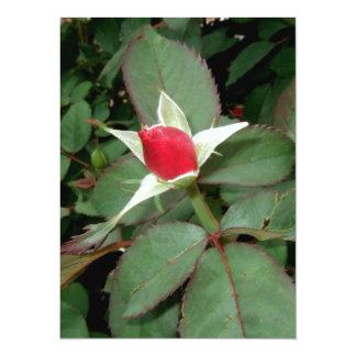 HEY! I;M BUDDING HERE! (rose design) ~ Personalized Invite