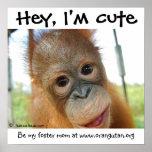 Hey, I'm Cute Baby Orangutan