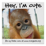 Hey, I'm Cute Baby Orangutan Posters