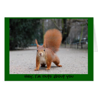 Hey, I'm nuts about you Card