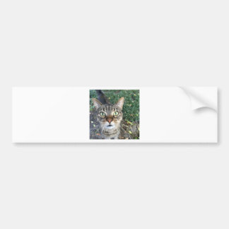 """Hey You"" says this cat Bumper Sticker"