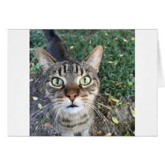 """""""Hey You"""" says this cat Card"""