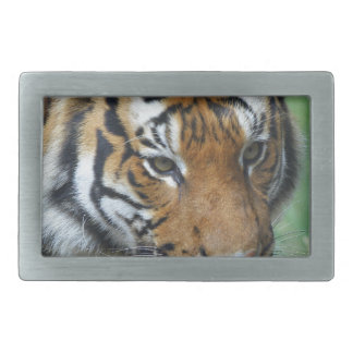 Hi-Res Malay Tiger Close-up Belt Buckle